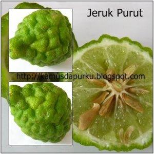 [Image: jeruk-purut3.jpg?w=300&h=300]